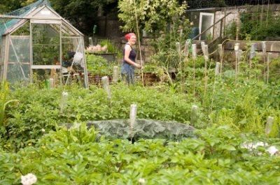 Hos glashusen.se kan man köpa fina växthus.