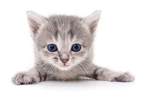 Söt kattunge nummer 1