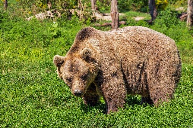 Vad gör du om du möter en björn i skogen ?