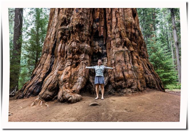 Stora och höga träd