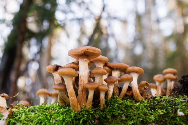 Lär dig mer om Världens största svamp.