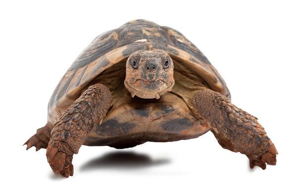 Sköldpaddan sköld